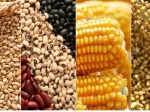 Efficient Agro Aduana - Assessoria em Importação / Exportação de Sementes e Mudas